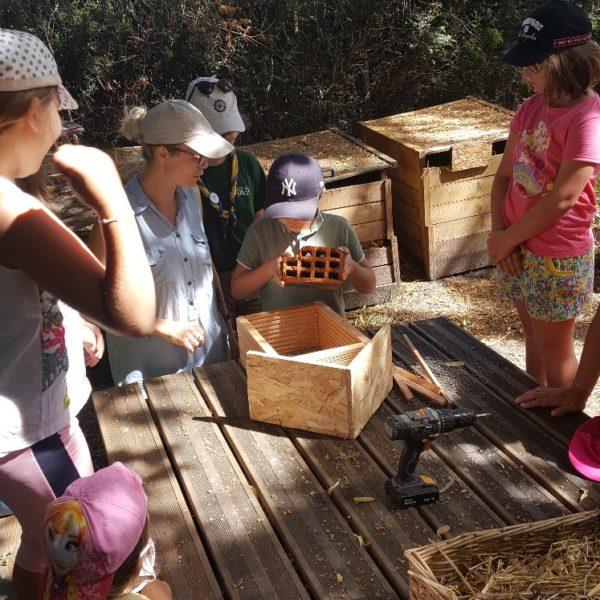 Les enfants du centre de loisirs offrent un gîte aux insectes