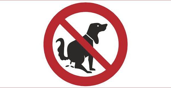 Déjections canines : n'oubliez pas de ramasser !